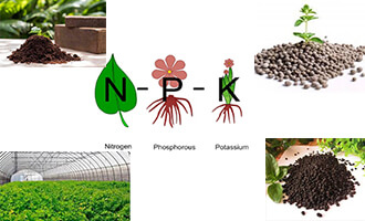 Essential Nutrient Elements of N P K from Organic And Compound Fertilizer(one)