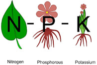 NPK from Organic And Compound Fertilizer