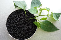 Reasons for poor absorption of fertilizer