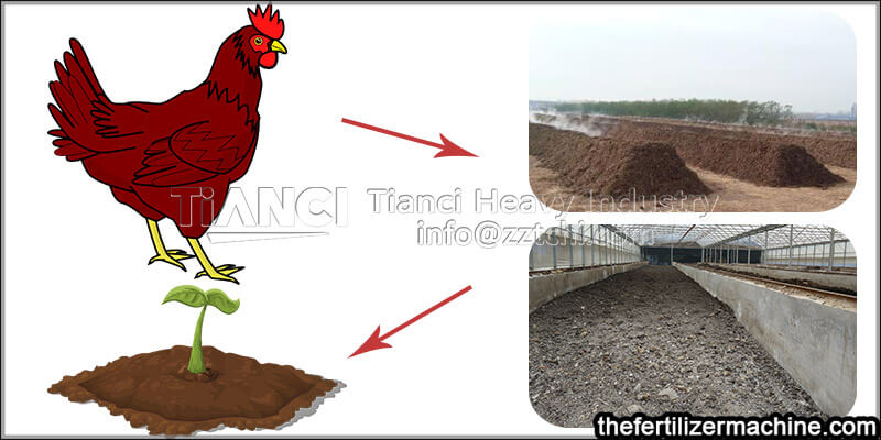 treat chicken manure to become high quality organic fertilizer