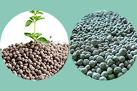 NPK fertilizer granules